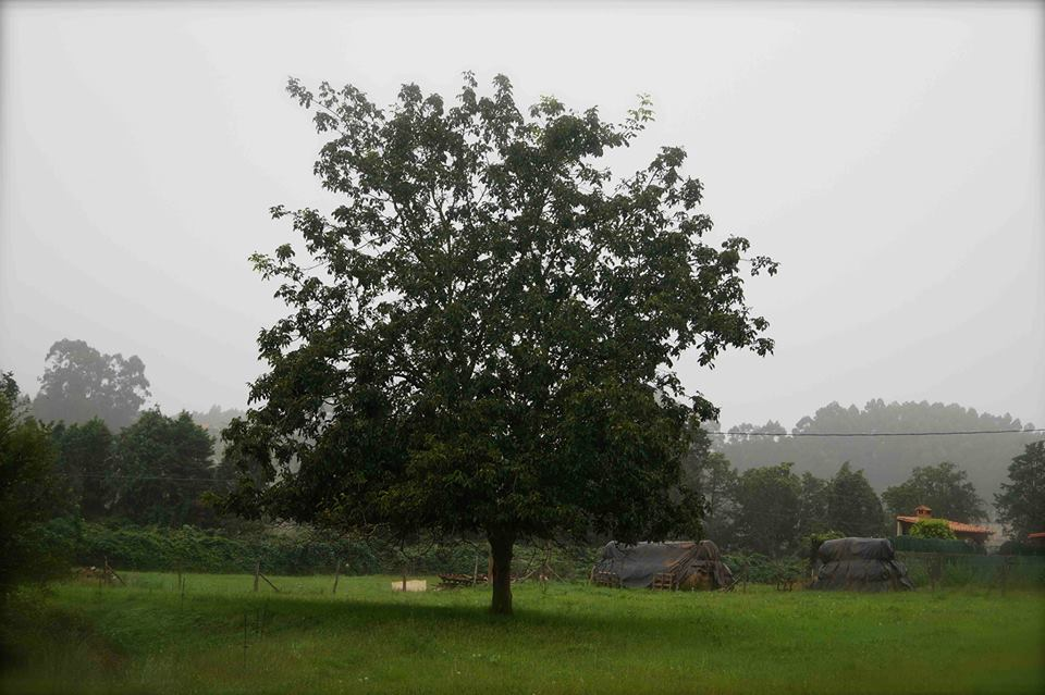 Árbol Confianza Michael Thallium
